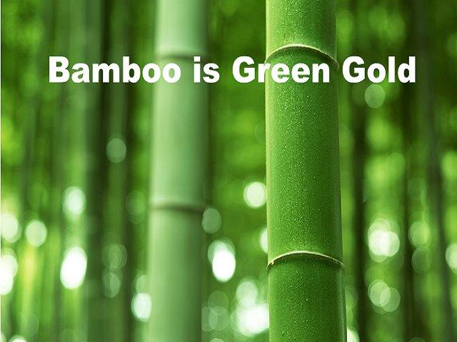 bamboo is green gold