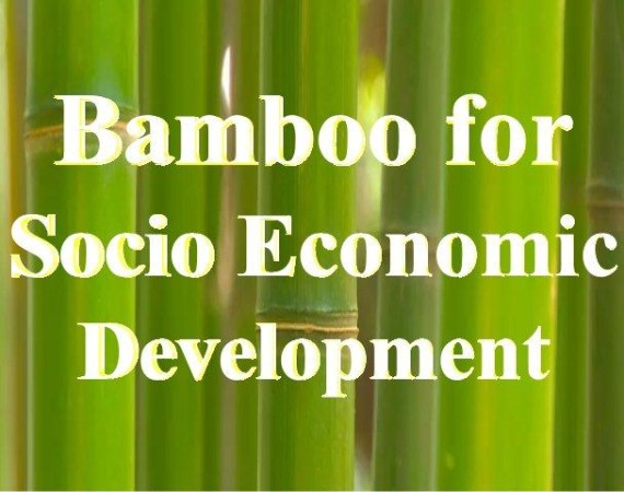 Bamboo for social economic development